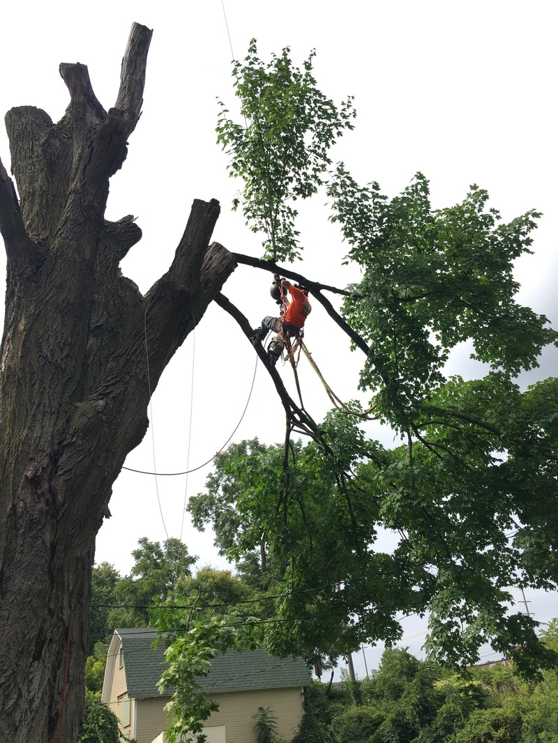 Branch removal Michigan